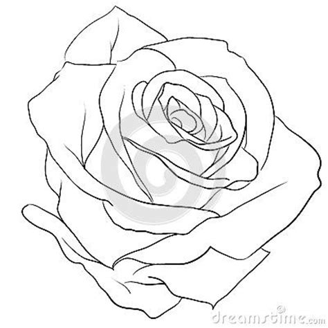 rose pattern line drawing rose budding outline google search tattoo ideas