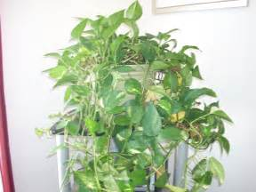 Inside Plants How To Maintain Indoor Plants Garden Guides
