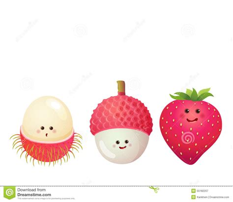 lychee fruit drawing fruits strawberry lychee litchi rambutan stock