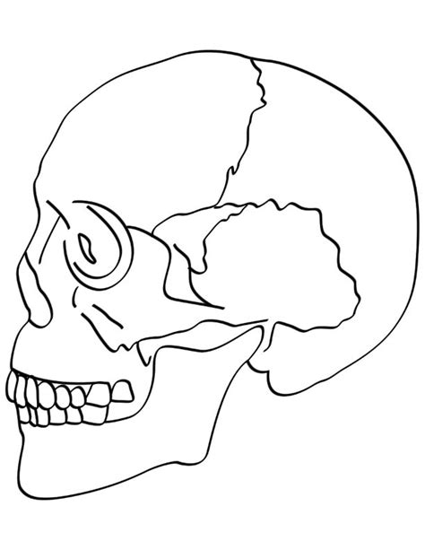 skull bones coloring pages download free skull bones