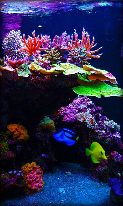 Android Aquarium Live Wallpaper Apk by Aquarium Live Wallpaper Android App Free Apk By Milan