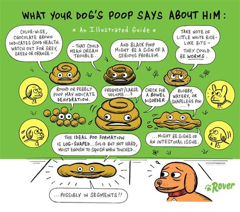 what to do with dog poop in backyard what to do with dog poop in your backyard 28 images