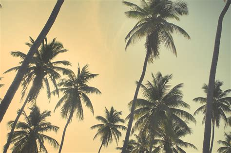 themes tumblr photography pin cute vintage backgrounds tumblr on pinterest