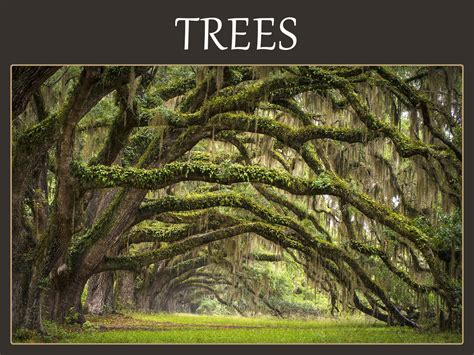 meaning of trees meaning of trees vocabulary tree i doyou trees rowan