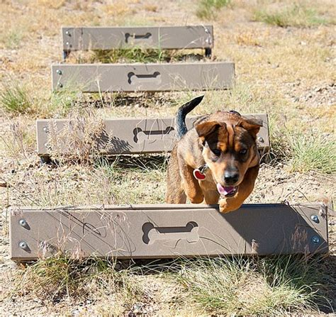 how to build a dog park in your backyard dog park equipment vancouver bc design build
