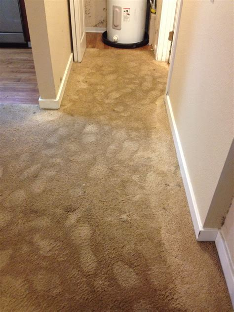 Help My Apartment Flooded Water Extraction Centurion Carpet Cleaning
