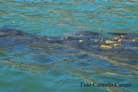licenza di pesca nelle acque interne tipo b ambiente 187 la citt 224 187 comune di licodia eubea
