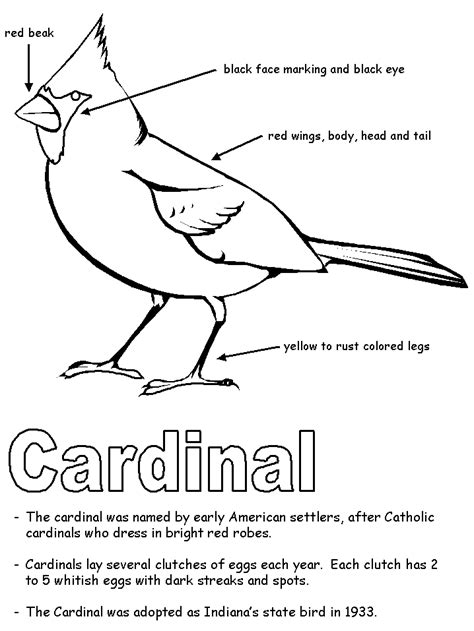 Indiana State Bird Coloring Page   image gallery indiana state bird drawing