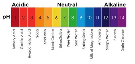 labelled diagram of ph meter ph balancing important key to good health