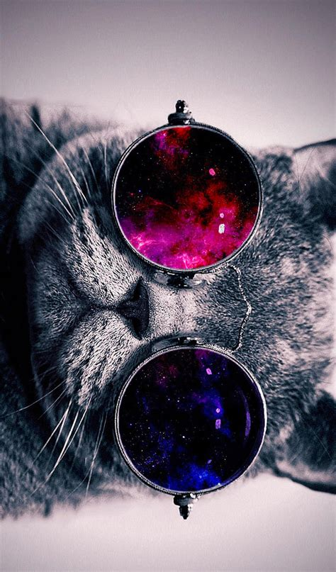 wallpaper cat with sunglasses cat with cosmos glasses animal hd wallpaper 19 by mrhaosac