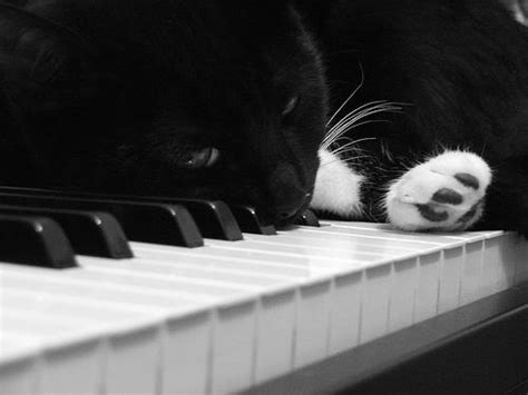 001410976x fantasie b op p piano 54 best images about cat on a piano on pinterest the
