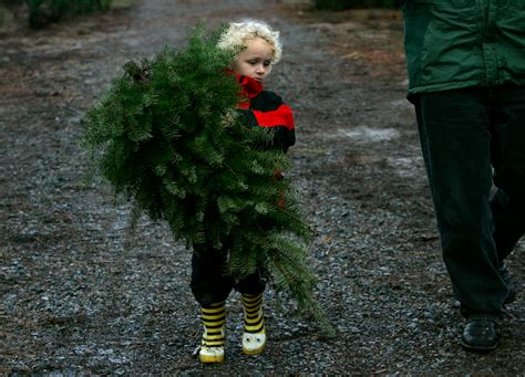map where you can cut down your own christmas tree in the