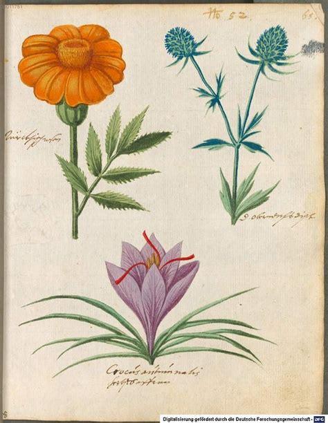 libro botanical illustration for beginners 767 best libros de vegetabilibus растения medieval manuscripts botanical images on