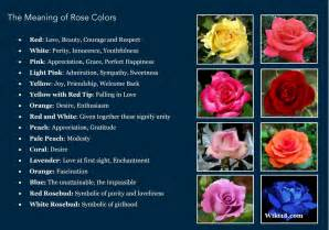 different colors of roses the meaning of colors positivemed