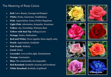 what do different colours mean the meaning of rose colors positivemed