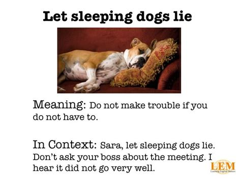 let sleeping dogs lie 51 best images about 102 on dire wolf dogs and search