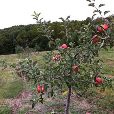 5 fruit tree fruit tree assortment fruit trees stark bro s