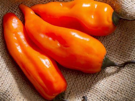 the peruvian yellow pepper main character in peruvian cuisine