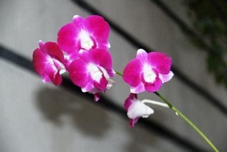 Sepatu Pink Gardenia anggrek tropis ratu bunga yang nimadesriandani