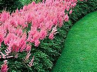 1000 images about gardening zone 8 shade plants on