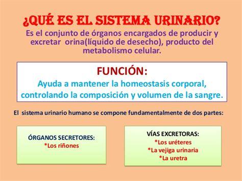 el resultado resumen de los clculos de la tabla diapositivas del sistema urinario