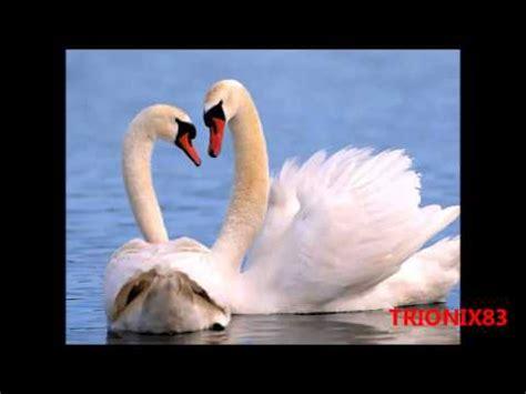 imagenes lindas y bonitas imagenes tiernas y bonitas animales enamorados imagenes