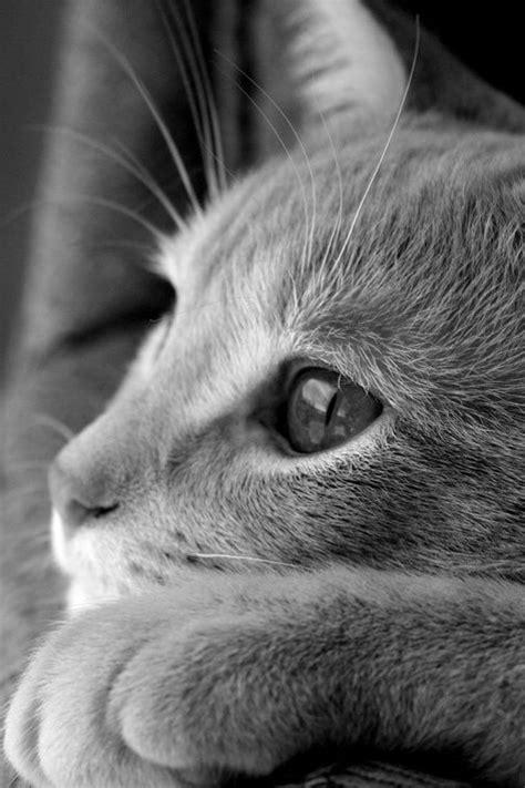 imagenes de ojos para wasap descargar fotos de gatitos tiernos al celular im 225 genes