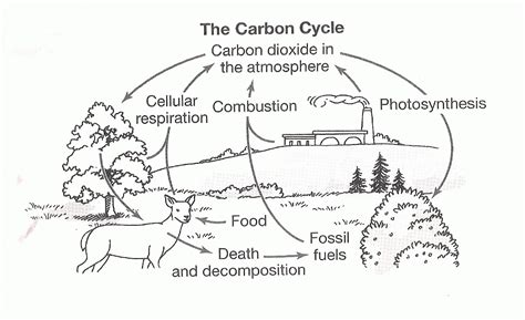 The Carbon Cycle Coloring Page Worksheet Coloring Home Cycle Coloring Pages