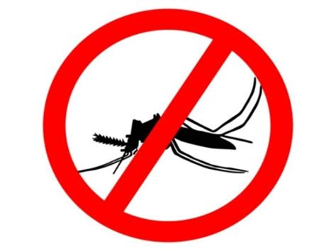 Stop Demam Berdarah Dengue dengue alert how to prevent it