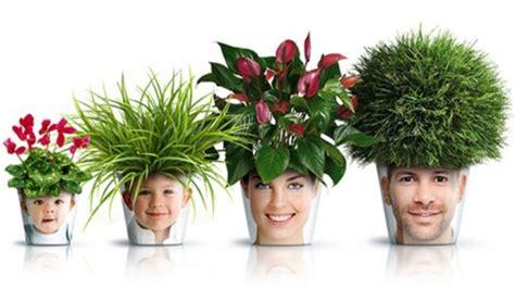 piante in vaso da interno modelli vasi da interno scelta dei vasi modelli vasi
