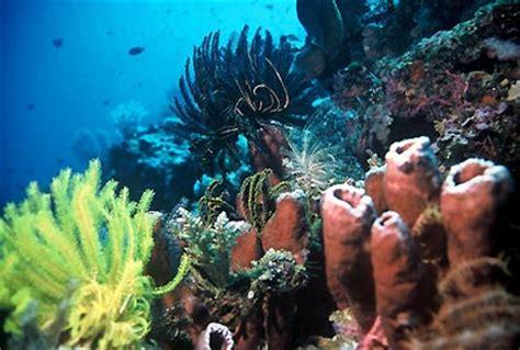 Pasir Batu Koral 1kg keindahan laut raja at sumber berita