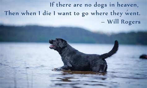 where do dogs go when they die quotes which will make you fall in with your pet all again