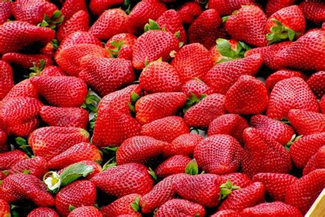 are strawberries bad for dogs fruits for dogs what s and what s not for your pet 187 teacupdogdaily