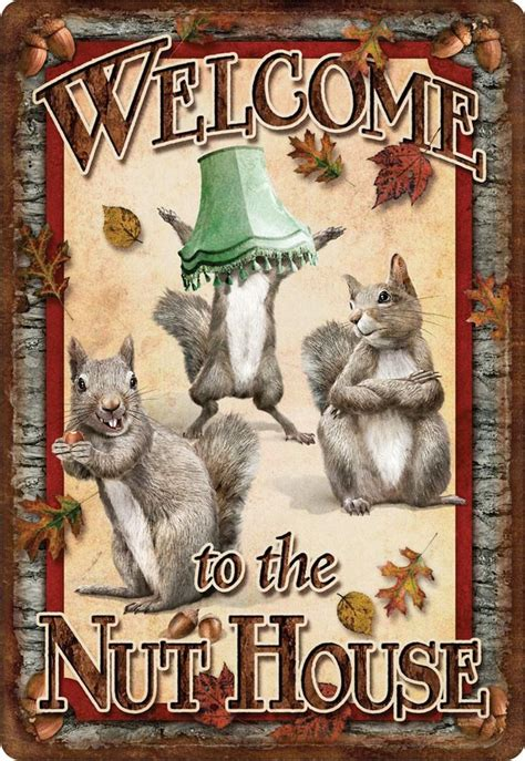 the nut house 17 best ideas about funny squirrel on pinterest