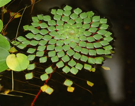 geometric patterns in nature photos of geometric patterns in nature page 2 david