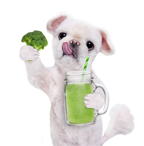 vegetables dogs can eat 6 vegetables dogs can eat according to science cheaply pet supplies simply