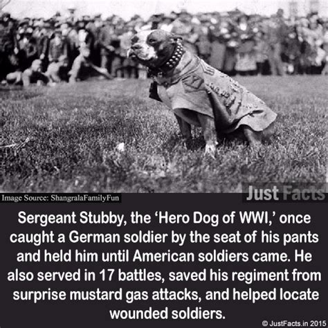 Sgt Stubby Of Wwi Sergeant Stubby