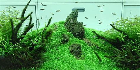 style aquascape understanding nature aquascaping style the aquarium guide