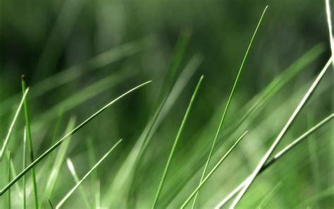 gambar gambar rumput  tinggi wallpaper