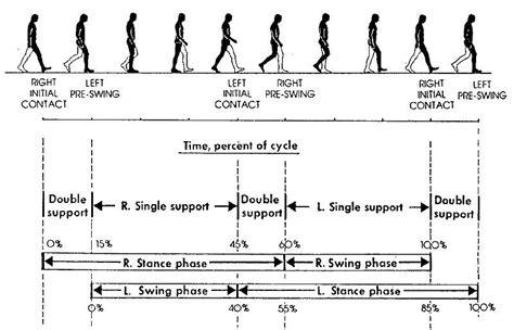 swing phase of walking gait