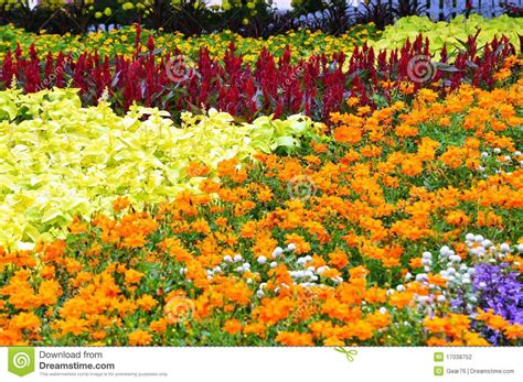 bed of flowers bed of flowers stock photo image of flowers flora