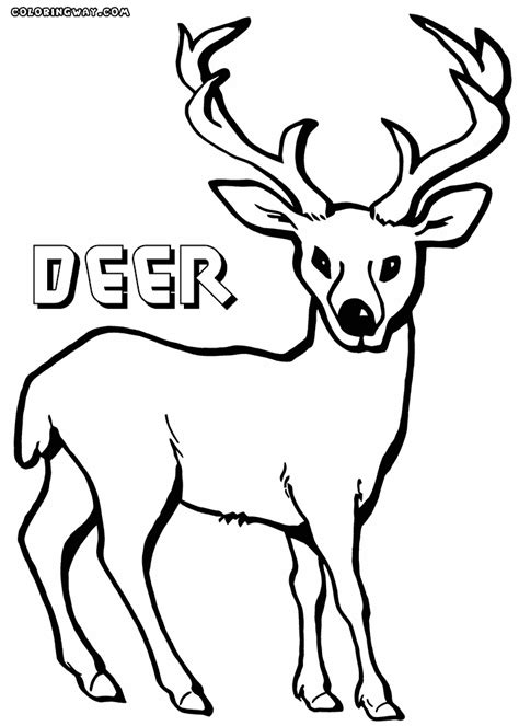 winter deer coloring page animal coloring pages deer deer coloring pages white