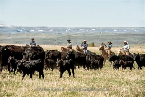 boat registration midland texas best 25 livestock branding ideas on pinterest j brand