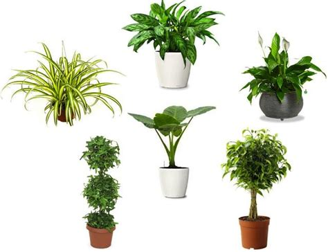 best house plant air purifying indoor plants for each room impressive magazine