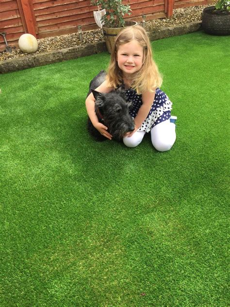 astro turf for dogs astro turf for dogs what do i need to lawns