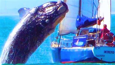whale lands on boat breaching whale lands on boat youtube