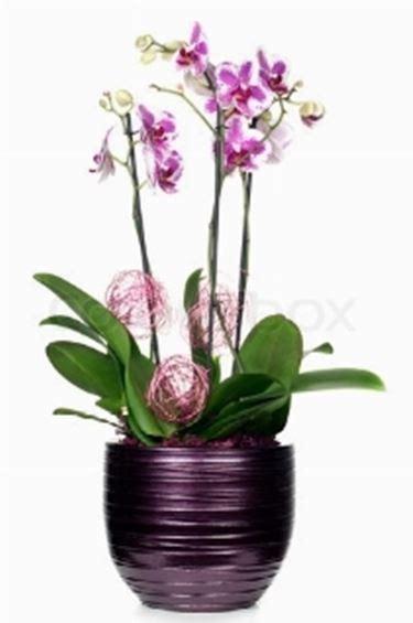 vasi per orchidee phalaenopsis vasi orchidea fioriere e vasi