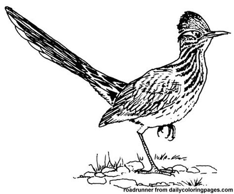 texas bird coloring page texas roadrunner bird coloring pages birds roadrunner