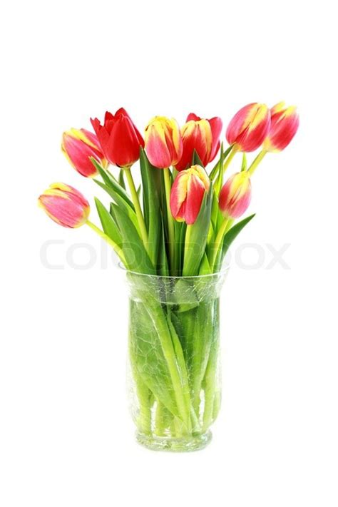 Pictures Of Tulips In Vases by Home Appliance Sch 246 Ne Tulpen In Der Vase Isoliert