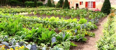 home vegetable gardening ideas own a personal garden by creating it with some vegetable